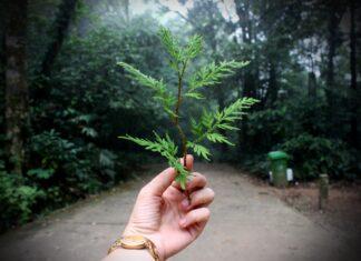ekologia ochrona środowiska